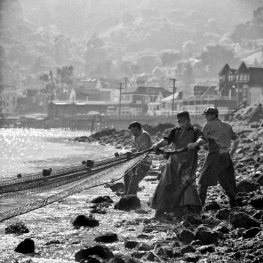 Fishermen hauling in their nets along Sausalito waterfront 1002